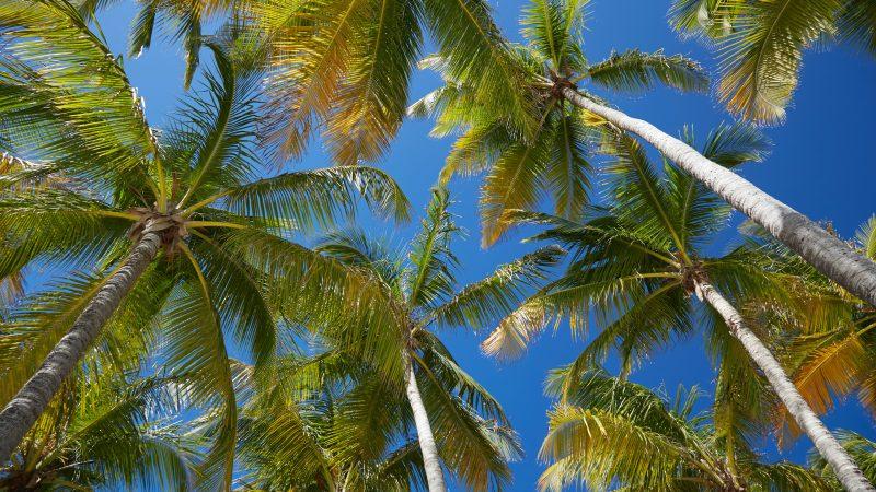 A la découverte d'une perle des antilles: la Guadeloupe