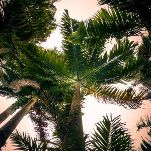 Road trip en Martinique, les incontournables de l'île aux fleurs