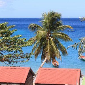 Découvrir la Martinique sous ses meilleurs jours