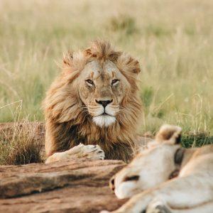 La Tanzanie, l'une des meilleures destinations pour un safari